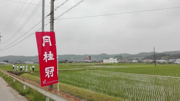 月桂冠 村米制度