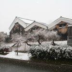 「京の冬の旅」が始まりました