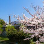 大倉記念館の桜とお花見